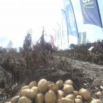 Potato Europe 2013